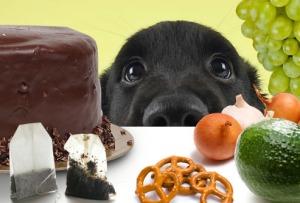 perro comida prohibida