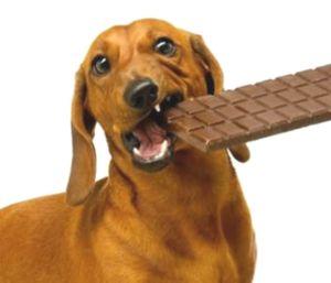 perro xoco